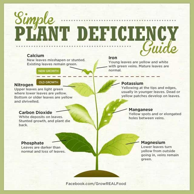 Simple Plant Deficiency Guide, Large-scale Gardening