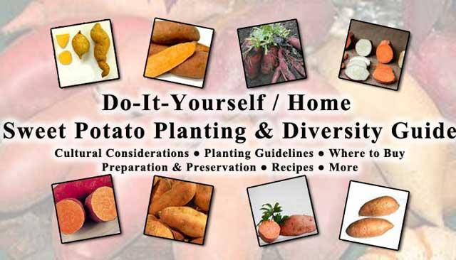Sweet Potato collage, One Community