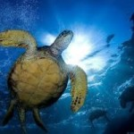 Preserve ocean life