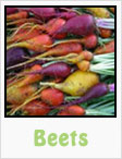 red beets, yellow beets, purple beets, gardening, planting, growing, harvesting, one community, recipes