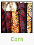 sweet corn, purple corn, popcorn, gardening, planting, growing, harvesting, one community, recipes