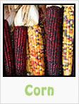 sweet corn, purple corn, popcorn, gardening, planting, growing, harvesting, one community, recipes