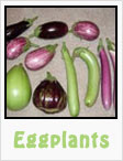 eggplants, long eggplant, purple eggplant, gardening, planting, growing, harvesting, one community, recipes