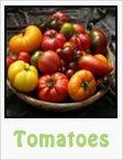 tomatoes, red tomatoes, yellow tomatoes, roma tomatoes, cherry tomatoes, beefsteak tomatoes, gardening, planting, growing, harvesting, one community, recipes