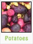 potatoes. red potatoes, white potatoes, purple potatoes, gardening, planting, growing, harvesting, one community, recipes