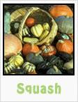 squash, pumpkins, winter squash, summer squash, gardening, planting, growing, harvesting, one community, recipes