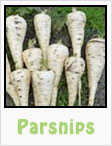 parsnips, gardening, planting, growing, harvesting, one community, recipes