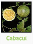 cabacui, cabacui plant, gardening, planting, growing, harvesting, one community, recipes