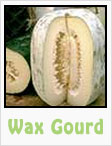 wax gourd, gourds, gardening, planting, growing, harvesting, one community, recipes