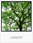 Food Forest Canopy Plantings, One Community