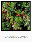 Food Forest Groundcover Plantings, One Community