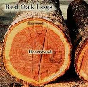 Tree Rings for a Tree House Tree