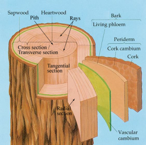 Inner Structure of a Tree, Tree House Tree Health