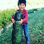 Giant Bullet Head Wax Melon